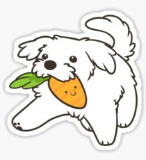 Maltese puppy Sticker
