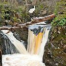 Twin Pecca Falls, Ingleton Waterfalls Trail by Sue Knowles