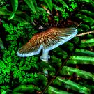 Just One More Time ~ Mushrooms ~ by Charles & Patricia   Harkins ~ Picture Oregon