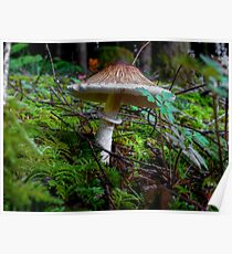 Stand Tall ~ Mushrooms ~ Poster