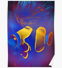 4508 Fish and Anemone  Poster