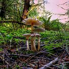 Small But Strong ~ Mushrooms ~ by Charles & Patricia   Harkins ~ Picture Oregon