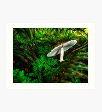 A Little Off Tilt ~ Mushrooms ~ Art Print