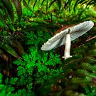 A Little Off Tilt ~ Mushrooms ~ by Charles & Patricia   Harkins ~ Picture Oregon