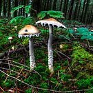So Like Where Are We? ~ Mushrooms ~ by Charles & Patricia   Harkins ~ Picture Oregon