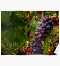 Yes I Dew ~ Grapes ~ Poster