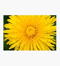 Dandelion on macro closeup Photographic Print