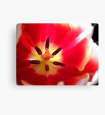 Tulip Macro # 10 Canvas Print