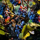 There Seems To Be Some Blue ~ Grapes ~ by Charles & Patricia   Harkins ~ Picture Oregon