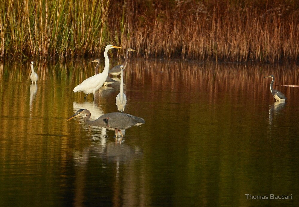 Early Morning Gathering by TJ Baccari Photography