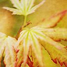 Japanese Maple Leaves Autumn Colors Texture Effect by Natalie Kinnear