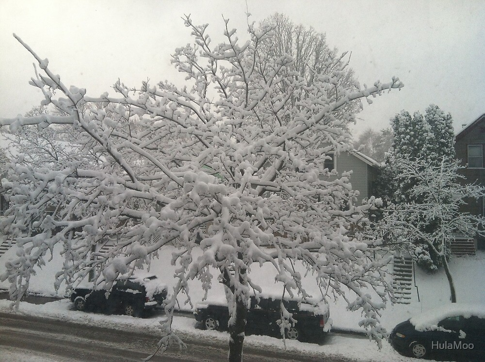 Winter tree by HulaMoo