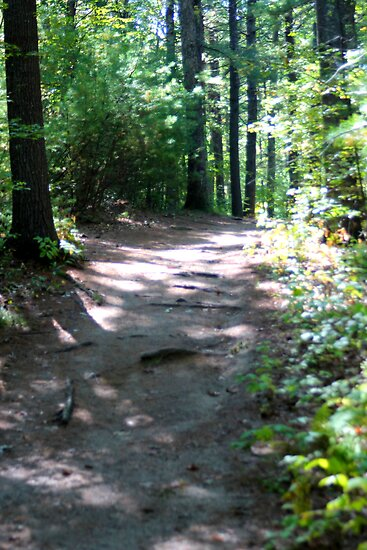 Noanet Woodlands Hiking Trail by CapeCodGiftShop