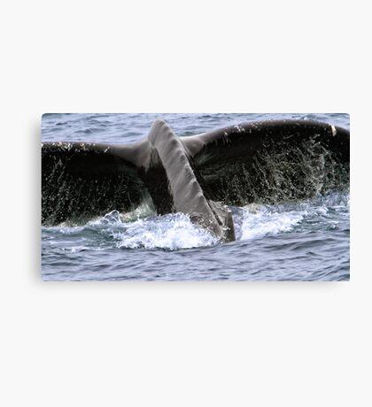 Dive ! Canvas Print