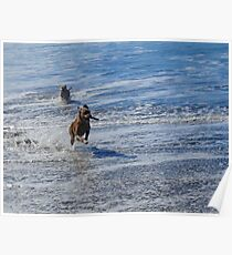 Dogs At Ocean Beach Poster