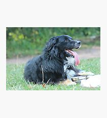 A mans best friend Photographic Print