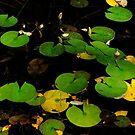 Lilly Pads in Color by steeber