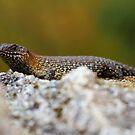 Lizard by Kevin Brett