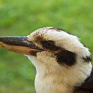 kookaburra by sarcalder