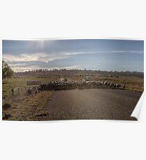 Sheep Crossing Poster