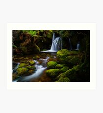 One of the Bastion Cascades, Meander Forest Reserve, northern Tasmania Art Print