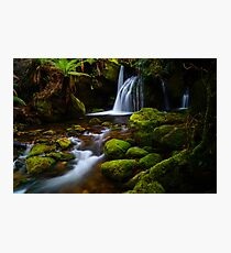 One of the Bastion Cascades, Meander Forest Reserve, northern Tasmania Photographic Print