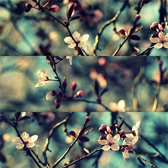 Vintage Blossoms - Triptych by Kitsmumma