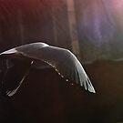 In flight by Tamis