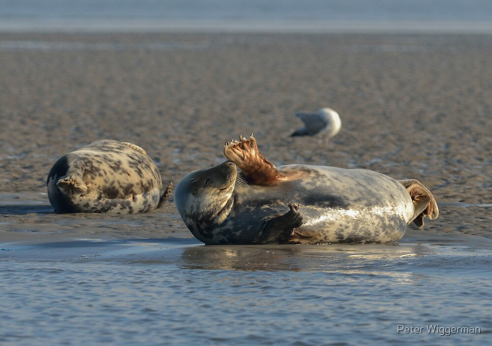 Seals - I by Peter Wiggerman