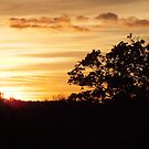 """""""NEW FOREST SUNSET"""" by keithbutcher"""