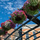 Hanging Baskets by Photopa