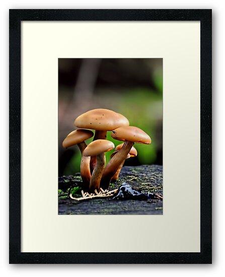 Mushrooms by Heather Haderly