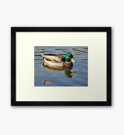 Deep Refelctions Framed Print