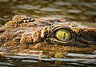 Crocodile Eye and Damselfly von Peter O'Hara