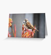 Sparrow Greeting Card
