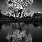 Zen Tree by Bob Larson