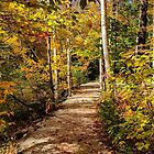 Grafton Notch state Park, Maine by fauselr