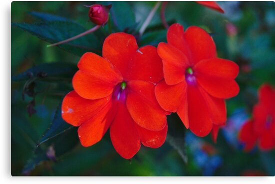 Macro Photography - Flowers  by willshadow297