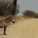 Zebra Crossing by Robin Hayward