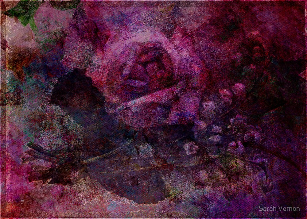 Valley Rose by Sarah Vernon