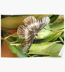 Black and White Butterfly on a Leaf Poster