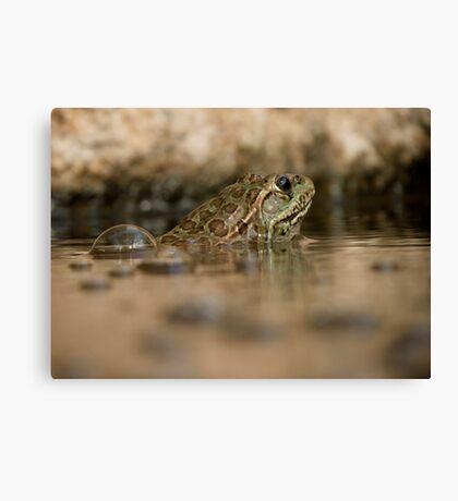 Chiricahua Leopard Frog ~ Gas Powered Canvas Print