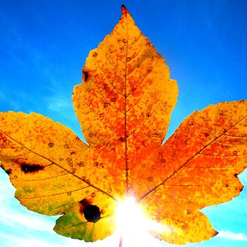 Maple Leaf against blue sky by angel1