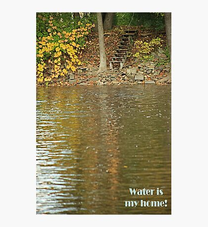 Water is my home! Photographic Print