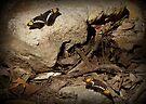 Arizona Sister Butterflies by Kimberly Chadwick