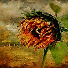 Who took the Sun out of the Sunflower... by © Kira Bodensted