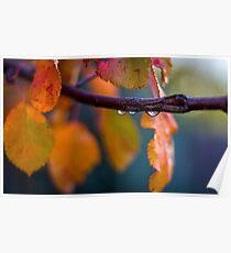 Fall Rain Poster