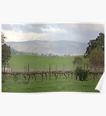 Vineyard in the Valley Poster