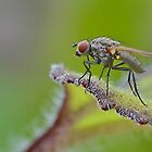 Macro Fly by relayer51