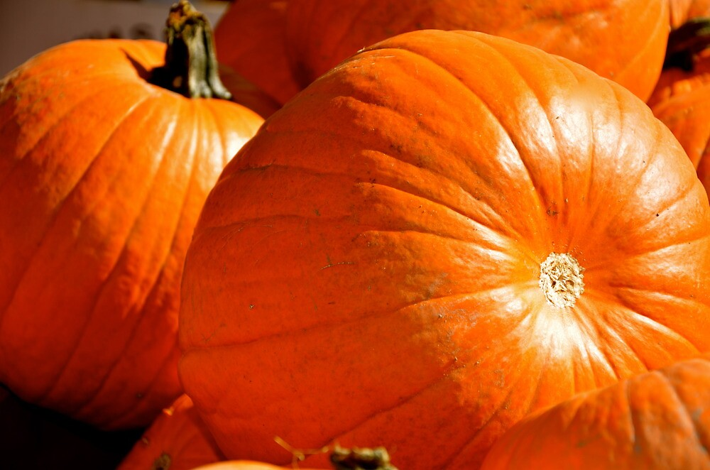 Fresh From the Pumpkin Patch! by Carol Clifford